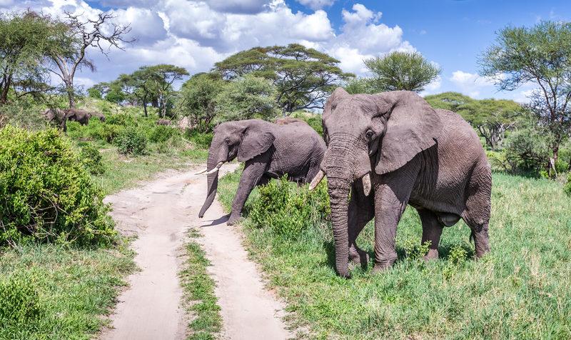 groep olifanten steken weg over in lake manyara national park