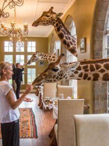 Nairobi Girafe Manor