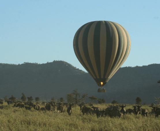 httpstanzaniaspecialist.comwp-contentuploads201610Luchballon-Safari-Tanzania-serengeti-1